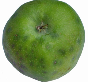 ROLE OF CALCIUM IN APPLE – lets Grow Apple