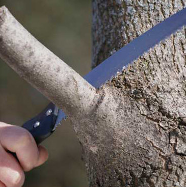 Image result for pruning branch collar
