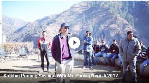 Kotkhai Pruning Session With Mr. Pankaj Negi Ji 2017