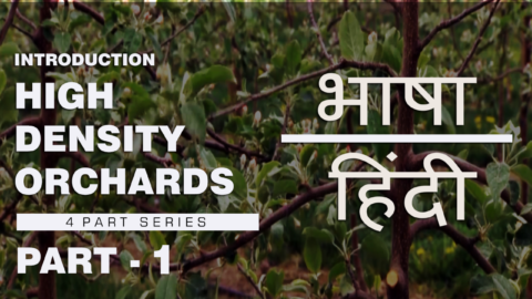 Watch | भाषा – हिंदी | High Density Orchard System | Part 1- Introduction