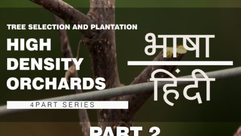 Watch | हिंदी | Part 2- Tree Selection and Plantation | High Density Orchard