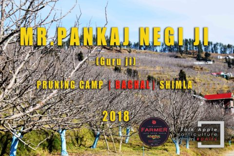 WATCH | Mr. Pankaj Negi ji | Pruning Camp | BAGHAL | Shimla |  Lets Grow Apple