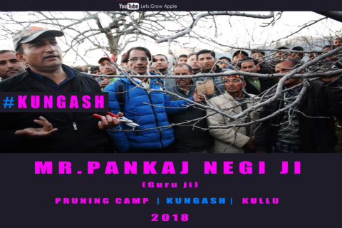 WATCH | Mr. Pankaj Negi ji | Pruning Camp | KUNGASH | KULLU |  Lets Grow Apple