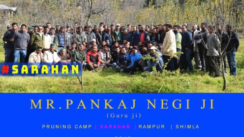 WATCH | Mr. Pankaj Negi ji | Pruning Camp | SARAHAN | Rampur  | Shimla  | 2018 |  Lets Grow Apple
