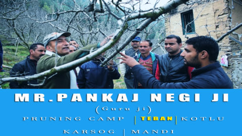 2018 | Mr. Pankaj Negi ji | Pruning Camp | TEBAN | KOTLU | Karsog | Mandi  | Lets Grow Apple