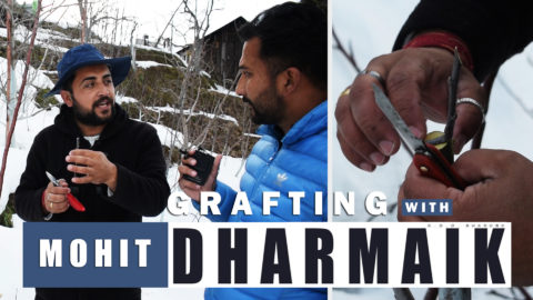 Watch | Grafting Tutorial with Mr. Mohit Dharmaik Ji | February 2019 | Lets Grow Apple