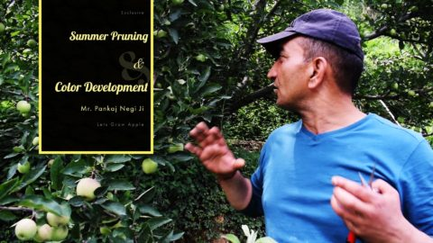 Summer Pruning talks | Mr Pankaj Negi JI