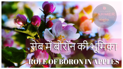 ROLE OF BORON IN APPLES