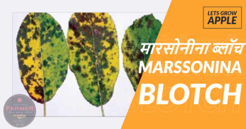 MARSSONINA BLOTCH