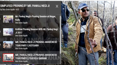PLAYLIST | SIMPLIFIED PRUNING BY MR. PANKAJ NEGI JI