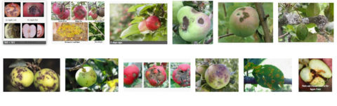 IPM – Stages of development and Corresponding Insect/Pest /Disease