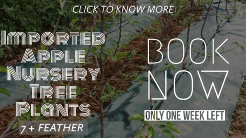 Imported Planting Material Booking Open 2019 | Plant List and Other Information
