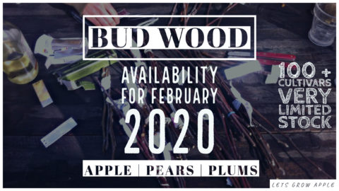 Bud Wood Availability For February 2020