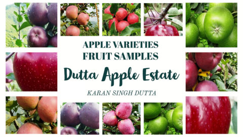 Apple varieties Fruit Samples – DUTTA APPLE ESTATE