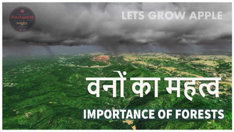 ( SHORT VIDEO )वनों का महत्व ( Importance of Forest. )