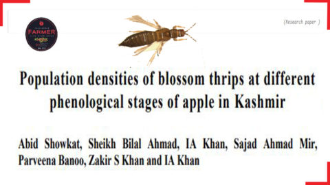 (Research paper ) Population densities of blossom thrips at different stages of apple in Kashmir