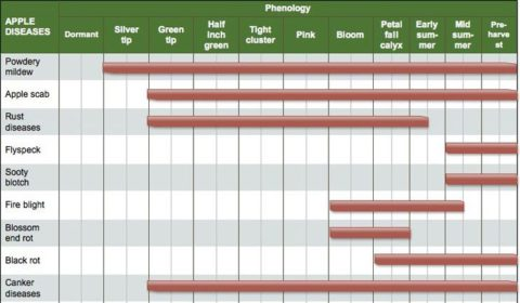 Insects/ Diseases/ Beneficial Scouting Calendars