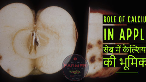 ROLE OF CALCIUM IN APPLE